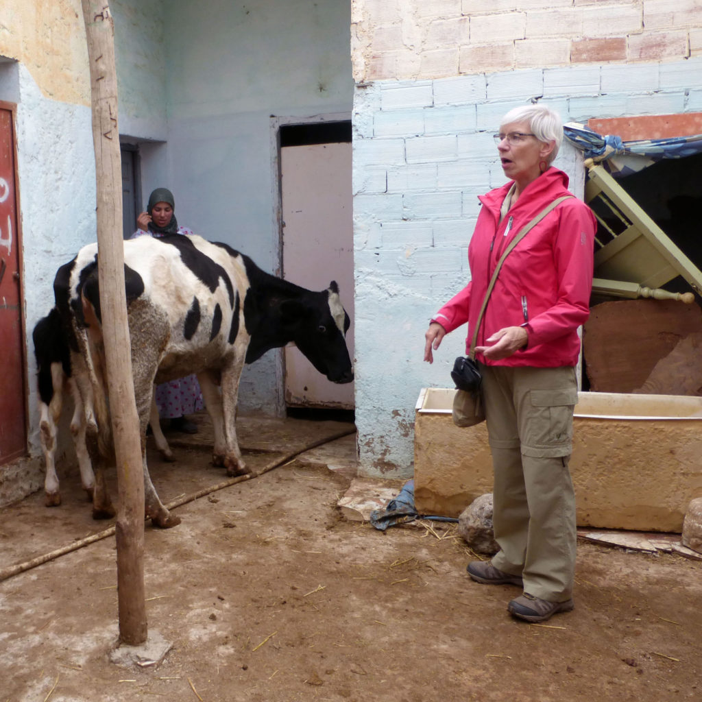 (2018) Viagroen, PUM mission Morocco, training dairy husbandry