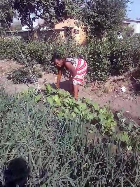 (2020) Musole Kabwe Zambia Slow Food gardens moestuin